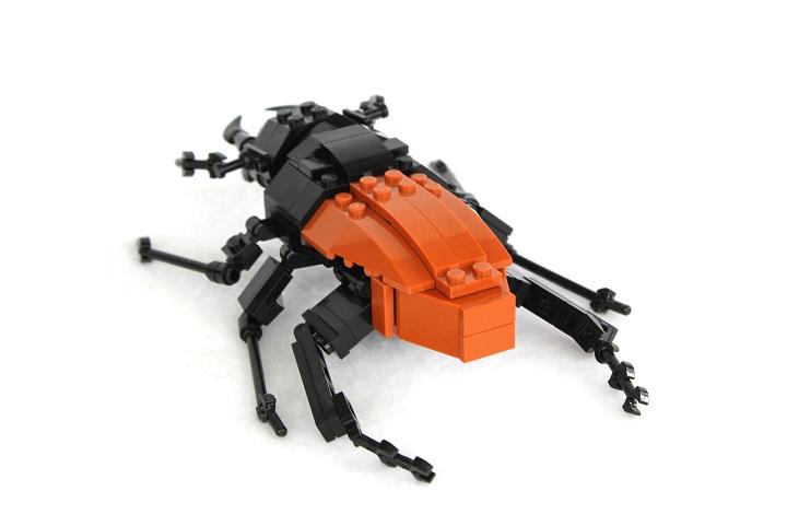 Beetle-back.jpg
